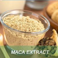 Free Sample Maca Root Extract 10:1 Powder/Maca Root Extract in Bulk Manufactures
