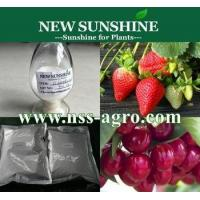 China Plant growth Regulator Best selling Price of Gibberellic acid 20% SP / tablet on sale