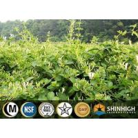 Botanical Extract Joint Health Manufactures