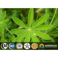 Botanical Extract Plant Protein Manufactures