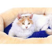 Buy cheap Pet bed Model:CB-14 from wholesalers