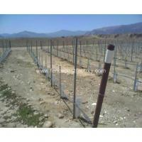 China Vineyard vertical line posts on sale