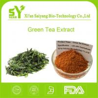 China Tea Polyphenols Green Tea Extract/Best Organic Green Tea Extract Powder for Weight Loss on sale