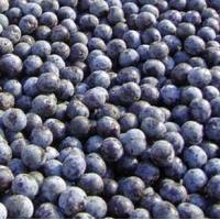 Acai Berry Extract Model: G1009 Manufactures