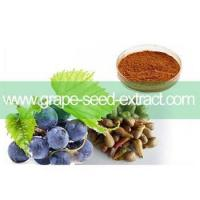 100% Natural whitening products Grape seed extract (HOT) Manufactures