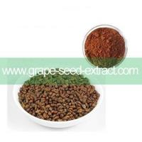 95% OPC Grape Seed Extract / Grape Seed Powder Proanthocyanidins Manufactures