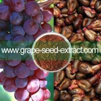Vigorous natural organic grape seed extract powder Manufactures