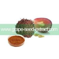 GMP factory supply natural 95% OPC Grape seed extract powder Manufactures