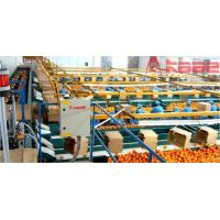 Whole Set Processing Line Photoelectrical Fruit And Vegetable Grading System Manufactures