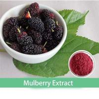 China Hot Selling Mulberry Fruit Extract/ Mulberry Powder Extract/Mulberry Extract Anthocyanidins 25% on sale