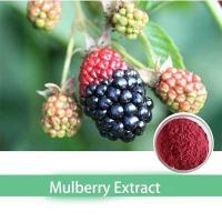 raw material Mulberry Leaf P.E for lower blood pressure Manufactures
