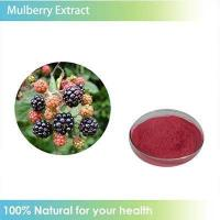 100% Pure Mulberry Leaf Extract / Morus alba leaf extract powder Manufactures