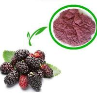 Vacuum Packed powder form mulberry fruit extract/Morus nigra Manufactures