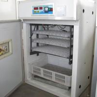 528 Chicken eggs incubator Manufactures