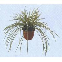 Buy cheap Silk Plants - Oniony Grass from wholesalers
