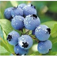 Buy cheap Blueberry Flavor Blueberry Flavor from wholesalers