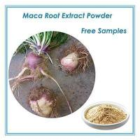 natural Maca Root Extract 10:1 Manufactures
