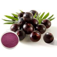 Acai Berry Extract Powder Manufactures