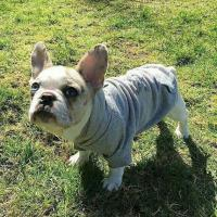 Quality Pet Clothing YZDC005 for sale