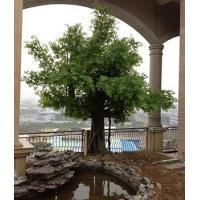 Item name: China factory made artificial ficus tree for rooftop garden decoration Manufactures