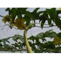 China Plant support net wholesale