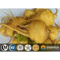 Maca extract powder Manufactures