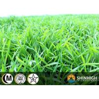 Conventional food Wheat grass powder Manufactures