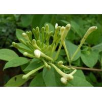 Buy cheap Honeysuckle from wholesalers