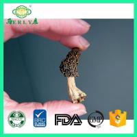 dried morel mushrooms for sale from Yunan Morchella esculenta