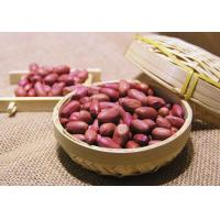 Peanut Roasted Peanuts With Red Skin Manufactures