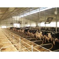 Buy cheap Cattle Free Stall from wholesalers