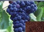 Grape Seed Extract Manufactures
