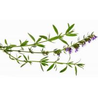 Buy cheap Essential oils Hyssop Essential Oil from wholesalers