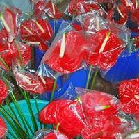 Buy cheap Fresh Anthuriums from wholesalers