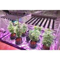 Quality Led Grow Light Hydroponic for Indoor Plants for sale