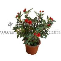 Haihong Insights Artificial Flowers (Indoor & Outdoor) artificial mini rose flower plant Manufactures