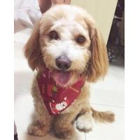 silk cotton Hot seller Amazon pet apparel accessories scarf and napkin Manufactures