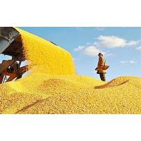 Buy cheap Asia Grains new crop feed grains cereals DDGS feed corn global trade from wholesalers