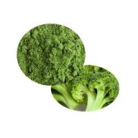 Bio Broccoli Powder Manufactures