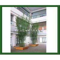 preserved bamboo Manufactures