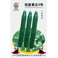 Quality Cucumber Seeds Westar Cucumber 3 for sale