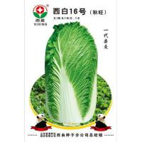 Buy cheap Chinese Cabbage Varieties West White 16 from wholesalers